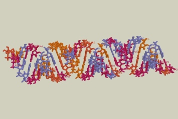 Picture RNA